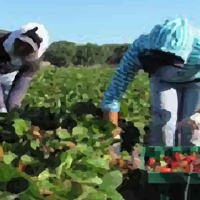 El futuro del trabajo en contextos de migración: repensando los programas de trabajadores migrantes temporales desde una perspectiva de derechos humanos